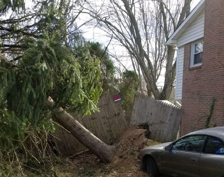 fallen tree almost hit car bomb cyclone noreaster damage