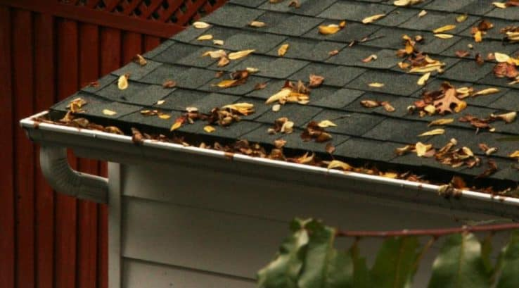 Do You Know What's Growing in your Gutters?
