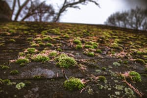 Green Algue Growth on Roof