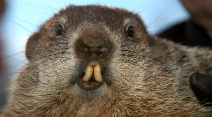 Six Ways to Keep Your Home Warmer If Punxsutawney Phil Sees His Shadow