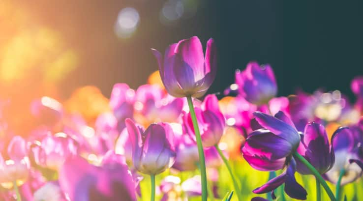Best Flowers to Plant in Spring