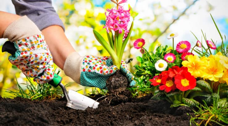 Tips for Gardening in Early Spring