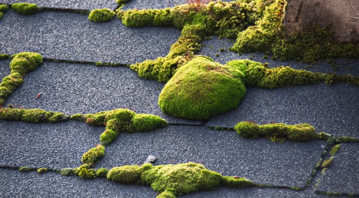 How to Prevent Roof Moss