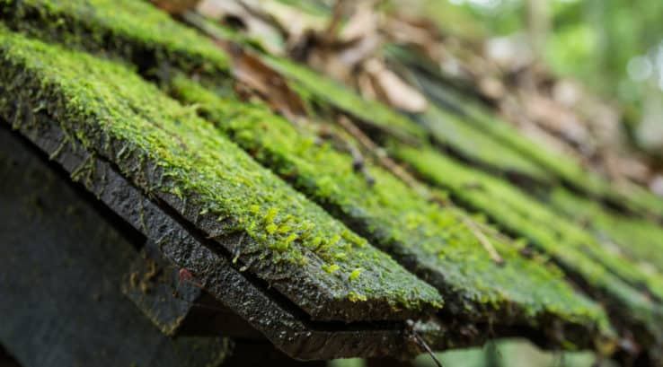 How to Remove Algae from a Roof
