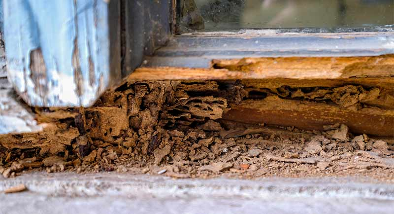 Termite Eaten Wood