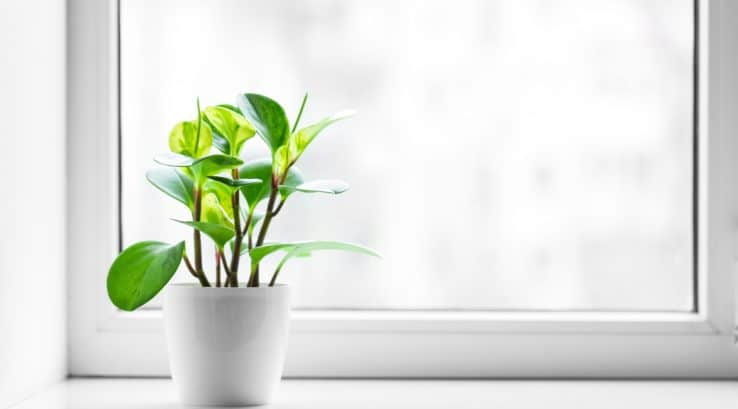 Best Windows for Plants