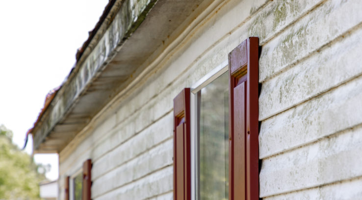 How to Maintain Your Siding So It Doesn't Get Moldy